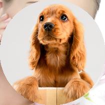 farmacie-livorno-veterinaria